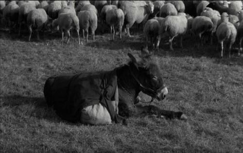 au hasard balthazar bresson donkey