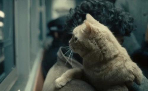 llewyn davis cat