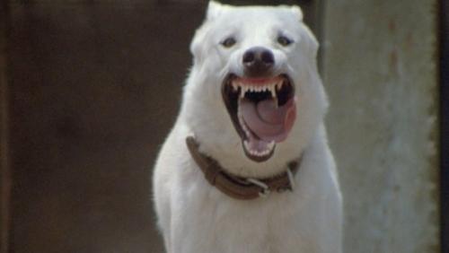 white_dog_fuller